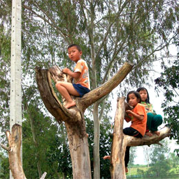 hmong children on tree
